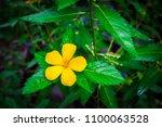 single vivid yellow flower of... | Shutterstock . vector #1100063528
