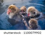 japanese snow monkeys relaxing ... | Shutterstock . vector #1100079902