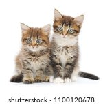 Stock photo two small kittens on a white background 1100120678