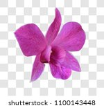thai orchid flower. clipping... | Shutterstock . vector #1100143448