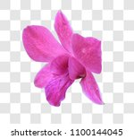 purple orchid with clipping... | Shutterstock . vector #1100144045