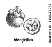 mangosteen. hand drawn sketch... | Shutterstock .eps vector #1100153072