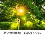 close up view sunbeams through... | Shutterstock . vector #1100177792