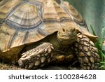 Stock photo sulcata african spurred tortoise 1100284628