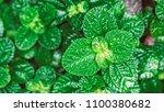 vivid green plant | Shutterstock . vector #1100380682