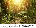 sunlight shining in tropical... | Shutterstock . vector #1100440025