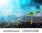 vintage seedling growing on the ... | Shutterstock . vector #1100541308