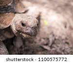 close up turtle face   Shutterstock . vector #1100575772