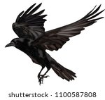Raven Flying . Black Raven...