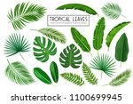 Vector Set Tropical Leaves....