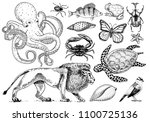 set of animals. reptile and... | Shutterstock .eps vector #1100725136