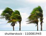 palms at hurricane | Shutterstock . vector #110081945