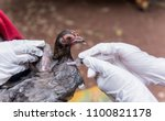 "Veterinary inject vaccine to chicken for prevent Poultry Diseases . Avian influenza is highly pathogenic avian influenza (HPAI). ""Bird flu"" is a similar to ""swine ,"" ""dog ,"" ""horse ,"" or ""human flu""."
