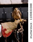 falconry practice with a kestrel | Shutterstock . vector #1100833388