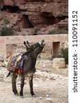 Donkey At Petra Jordan