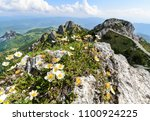 the flowers on the great... | Shutterstock . vector #1100924225