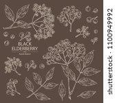 collection of elderberry black  ... | Shutterstock .eps vector #1100949992