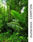 rain forest in thailand | Shutterstock . vector #110097206