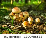 forest mushrooms in the grass.... | Shutterstock . vector #1100986688