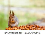 Photo Of Squirell Eating Nut