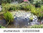 Natural Backyard Water Pond...