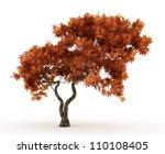 3d Downy Japanese Maple Tree I...