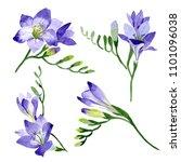 purple freesia. floral... | Shutterstock . vector #1101096038