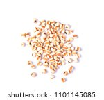 millets seed on white background | Shutterstock . vector #1101145085