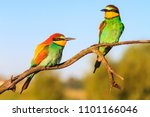 beautiful birds in the morning... | Shutterstock . vector #1101166046