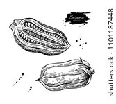 sesame nut and seed drawing.... | Shutterstock . vector #1101187448