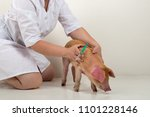 slender woman  veterinarian in... | Shutterstock . vector #1101228146