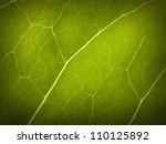 green leaf macro | Shutterstock . vector #110125892