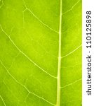 green leaf macro | Shutterstock . vector #110125898