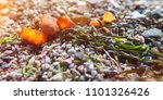 amber at baltic beach | Shutterstock . vector #1101326426