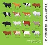 Domestic Cow Breeds Set Cartoo...