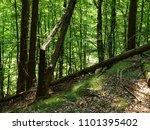primeval forest edersee | Shutterstock . vector #1101395402