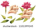 hand drawn ginger and... | Shutterstock . vector #1101399245