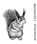 Graphical Sketch Of Squirrel...