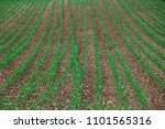 stony field on swabian alb with ... | Shutterstock . vector #1101565316