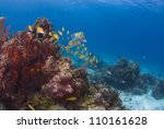 a school of fish swimming over... | Shutterstock . vector #110161628