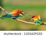 colored birds are wrecking on... | Shutterstock . vector #1101629102