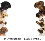 Stock photo different dogs looking from the side 1101649562