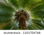 View Of Palm Tree  Stem And...
