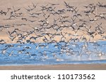 white fronted geese flock in... | Shutterstock . vector #110173562