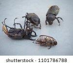 dynastinae black beetle | Shutterstock . vector #1101786788