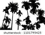 black palm tree on white...   Shutterstock . vector #1101795425