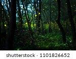 firefly  lightning bugs flying... | Shutterstock . vector #1101826652
