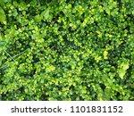 leaf green texture | Shutterstock . vector #1101831152