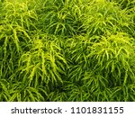 leaf green texture | Shutterstock . vector #1101831155