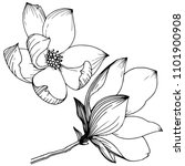 magnolia in a vector style... | Shutterstock .eps vector #1101900908